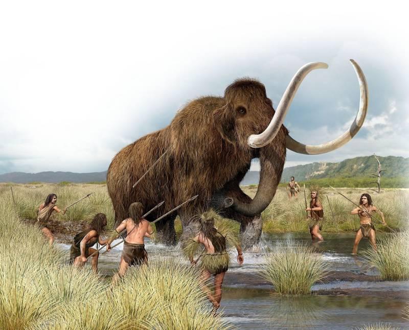 พบชิ้นส่วนอาวุธหินอายุมากกว่า 25,000 ปี ฝังในซี่โครงแมมมอธ  เชื่อมาจากการล่าในสมัยก่อน | CatDumb | เว็บไซต์ไวรัล  จับทุกกระแสบนโลกออนไลน์ มาย่อยให้คุณเข้าใจง่ายๆ  พร้อมคอนเทนต์พิเศษบ้างเป็นบางเวลา