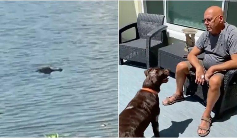 'ปล่อยหมากู๊ววววว' ลุงลงไปฟัดกับแอลลิเกเตอร์แบบตัวๆ พยายามช่วยชีวิตน้องหมา