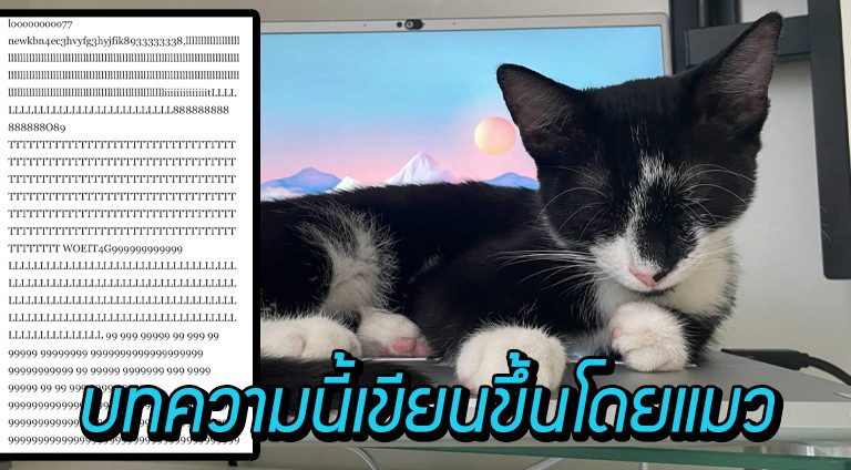 """เว็บไซต์แชร์บทความ """"แมวพิมพ์"""" ผลงานของ 'ไมโล' แมวผู้ชื่นชอบในการเหยียบแป้นพิมพ์"""